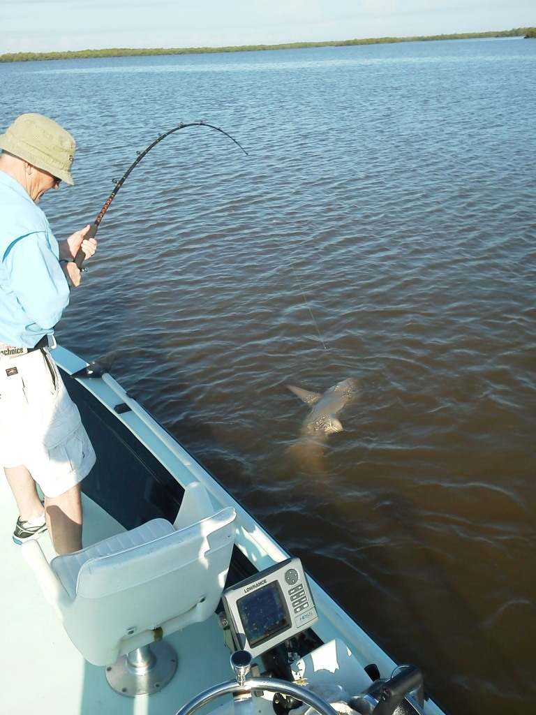 Walton shark 1 light tackle and fly fishing charters in for Marco island fishing guides