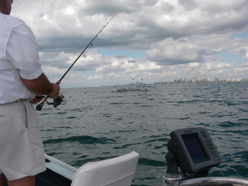 January 25 2012 003 light tackle and fly fishing for Charter fishing marco island