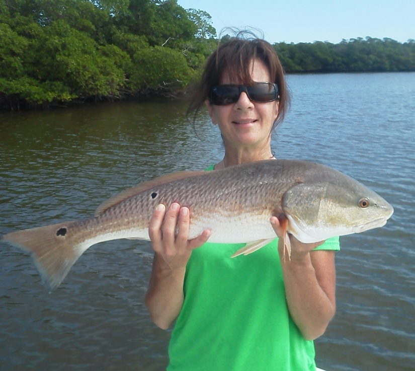 Amy Spegal with an over slot redfish released last week in Rookery Bay.