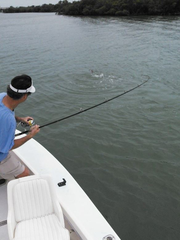 Steve J. puts the finishing touches on a big tarpon released Friday afternoon, 4/17
