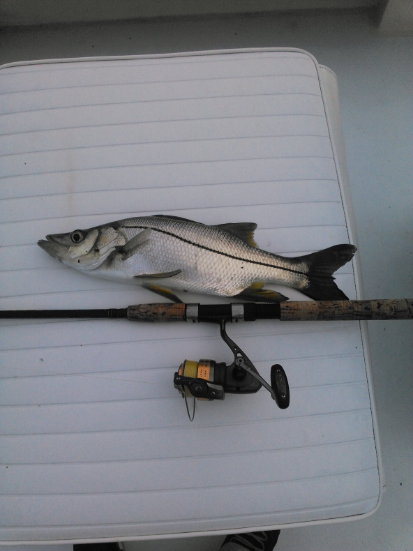 My rare tarpon/fat snook